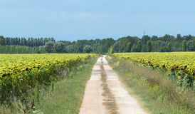 Country near Ravenna (Italy) Stock Photography