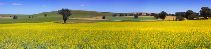 Country NSW farmland panorama Royalty Free Stock Photo