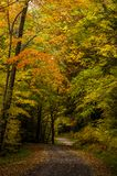 Country One-Lane Roads - Kumbrabow State Forest, West Virginia. A view of a curvy, country one-lane road at the Kumbrabow State Forestdeep in the mountains royalty free stock image