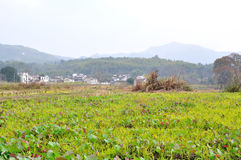 The country paddy fields Royalty Free Stock Image