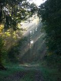 Country path. With sun rays in early morning Stock Image