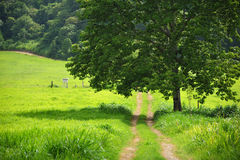 Country path Royalty Free Stock Photo