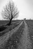 Country path Royalty Free Stock Images