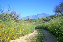 Country path. A dirt road in the countryside in Italy Royalty Free Stock Photo