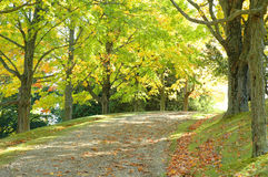 Country Path. Colorful trees line a country path Stock Image