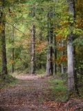 Country Path. Wooded Trail Stock Images