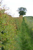 Country path. Hedgerow with pathway alongside a field leading to a tree on horizon Royalty Free Stock Photography