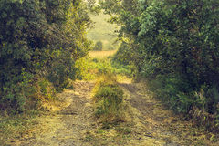 Country path in a deep forest Stock Photos