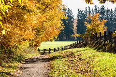 Country path with fall foliage and wooden fence. Fence and fall colours on a sunny autumn day Royalty Free Stock Image