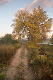 A Country Path and a Fall Tree. A dirt road leading into the country with a Fall tree full of colorful autumn leaves royalty free stock photo