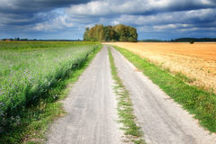 Country path between fields Stock Image