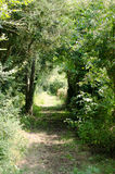 Country path. A  country path through hedges and trees Royalty Free Stock Photography
