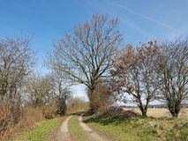 Country path with a markedly tree in North Germany in spring. A Kink or Hedged bank in German: Knick is a woody overgrown, mostly artificially built earth or Stock Photography
