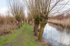 Country path in a rural landscape with pollard willows at both s Stock Photos