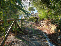 Country path and steps Stock Image