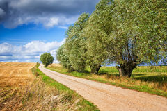 Country path with willows. Country Road curving among the knotted willows. Masuria, poland royalty free stock image