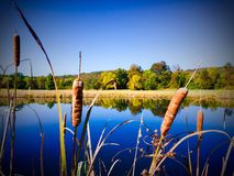 Country Pond. Autumn Stock Photos