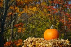 Country pumpkin. Single pumpkin placed in a country setting with dry leafs and colorful maple trees on the background Stock Images