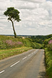 Country Road. English Country Road in Summer Stock Photos
