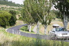 Country road. Trees and country road near Balaton Stock Image