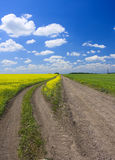 Country road. In the field Stock Image