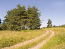 Country road. Conducting in a wood Royalty Free Stock Photo