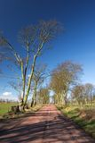 Country Road. A country road in early spring with large trees, still bare of leaves Stock Photo