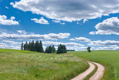 Country road. Road in the field.The cloudy sky.The road conducts in small wood Stock Images