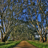 Country Road. A typical Australian back lane or country road with blue skies, red gravel and overhanging eucalyptus trees on a sunny day stock images