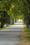 Country Road. Walk down country road lined with trees Royalty Free Stock Photo