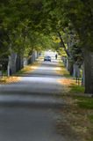 Country Road. Walk down country road lined with trees Royalty Free Stock Photography