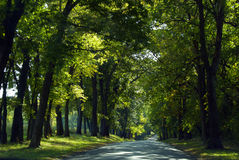 Country Road. Lonely forest road in the country, Central Illinois, USA Stock Photo