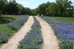 Country Road. A country dirt road lined with wildflowers Stock Image