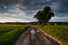 Country road. Village landscape with road and lonely tree Stock Photo
