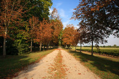 Country road. Along the grapevines in Bordeaux, France Royalty Free Stock Image