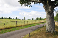 Country Road. Tree Growing beside a Country Road Stock Images