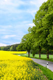 Country road. Making a curve with yellow rapeseed on the left side Royalty Free Stock Photos