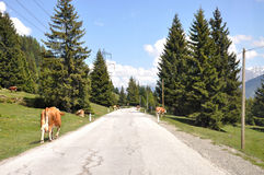 Country road. Royalty Free Stock Images