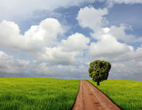 Country road. Cross grass field with alone tree royalty free stock image