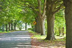 Country road Royalty Free Stock Image