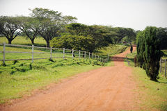 Country road. A country road in rural area stock photos