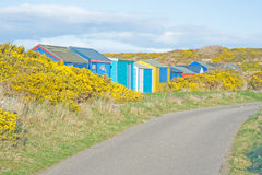 Country road. Narrow single track Scottish country road with a profusion of  gorse bushes in flower and colorful bathing huts Royalty Free Stock Photos