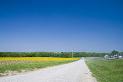 Country road. Gravel road going through the field in rural Indiana Stock Image
