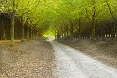Country Road. With fall colors Stock Photo