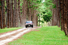 Country road. Car driving on country road green trees Stock Photo