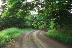 Country road. View in early morning Stock Image