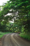 Country road. View in early morning Royalty Free Stock Photos
