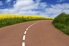 Country road. Making a curve with yellow rapeseed on the left Royalty Free Stock Images
