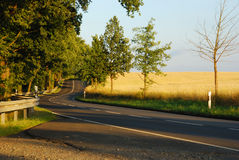 Country road. In the fresh green and field Royalty Free Stock Images