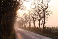 Country road. With trees, in golden morning light and fog Stock Image